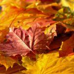 Opruimen herfstbladeren